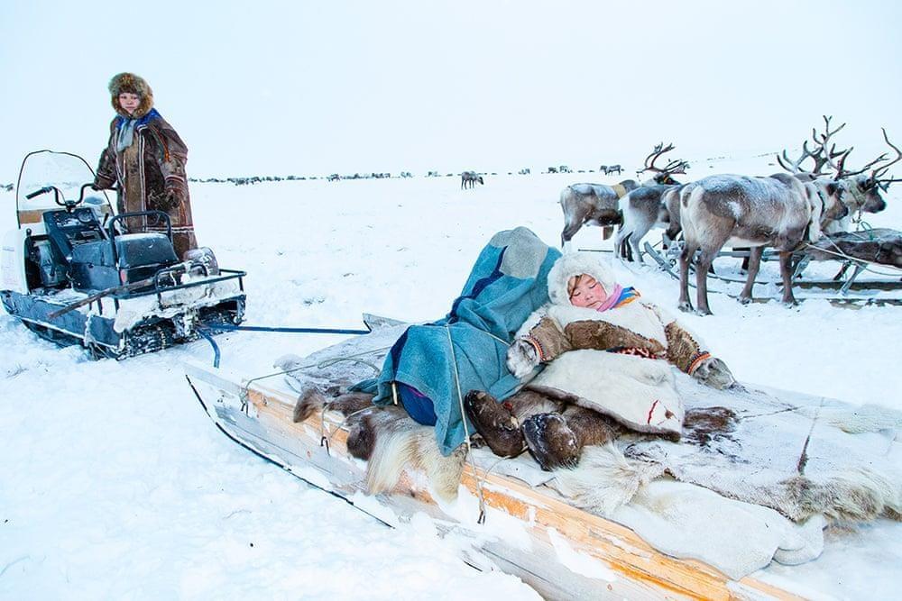 Bo lac du muc Siberia giua canh dong bang gia khong lo hinh anh 6