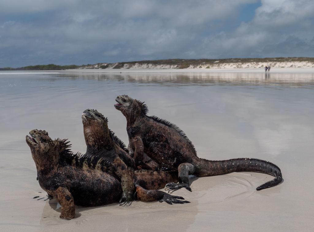 Dao Galapagos anh 3