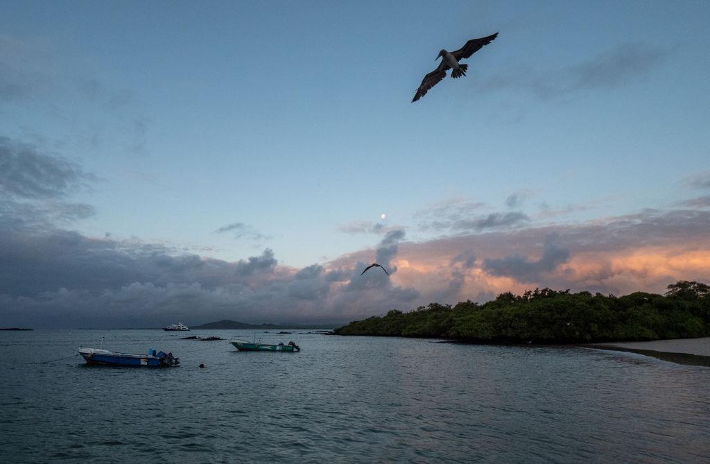 Dao Galapagos anh 1