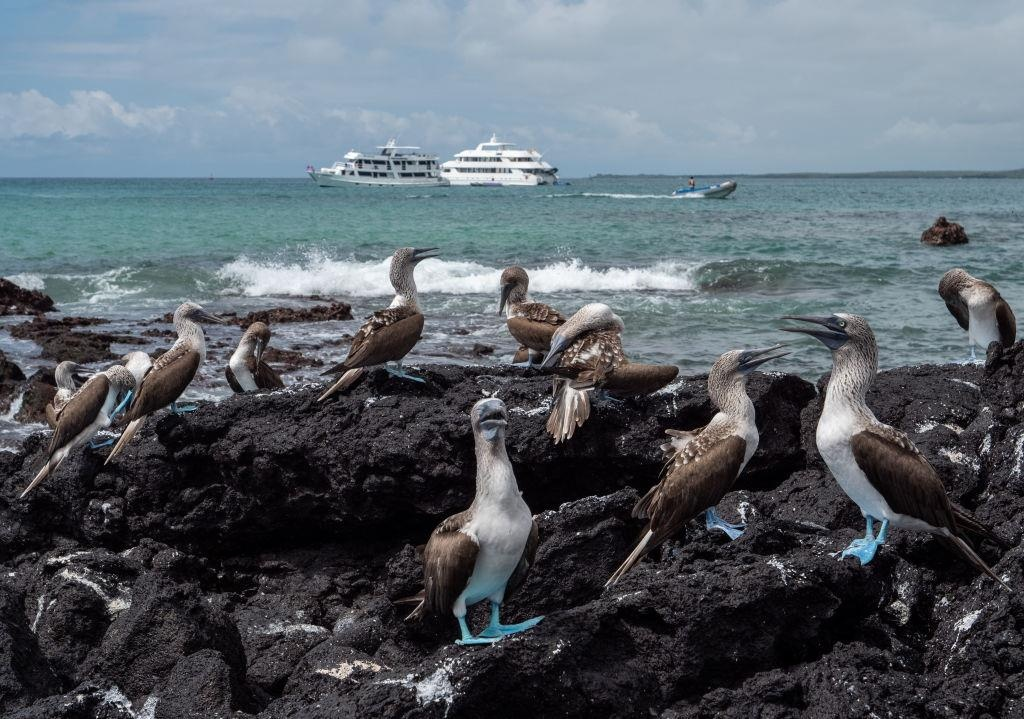 Dao Galapagos anh 5