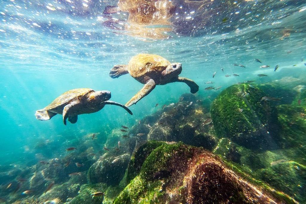 Dao Galapagos anh 2