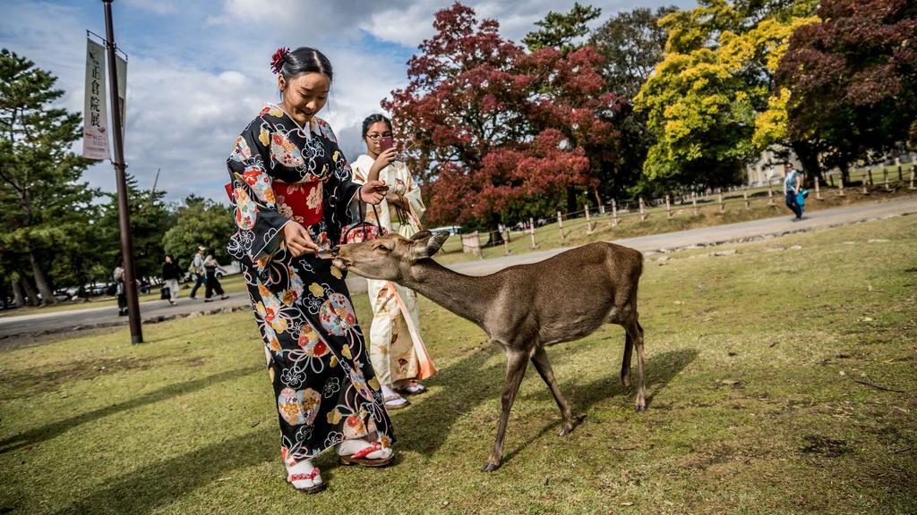 quay roi geisha anh 4