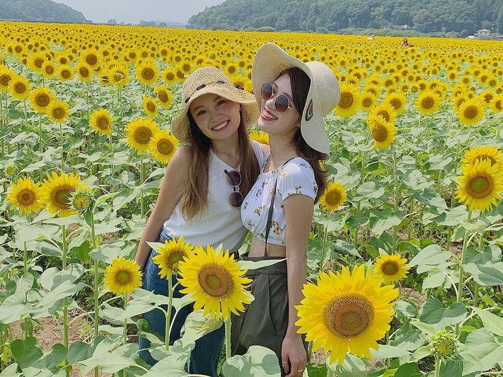 Kết quả hình ảnh cho cánh đồng Hoa hướng dương tại Nhật Bản