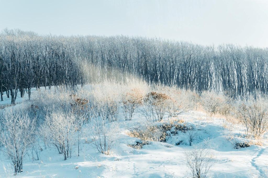 Hokkaido anh 1