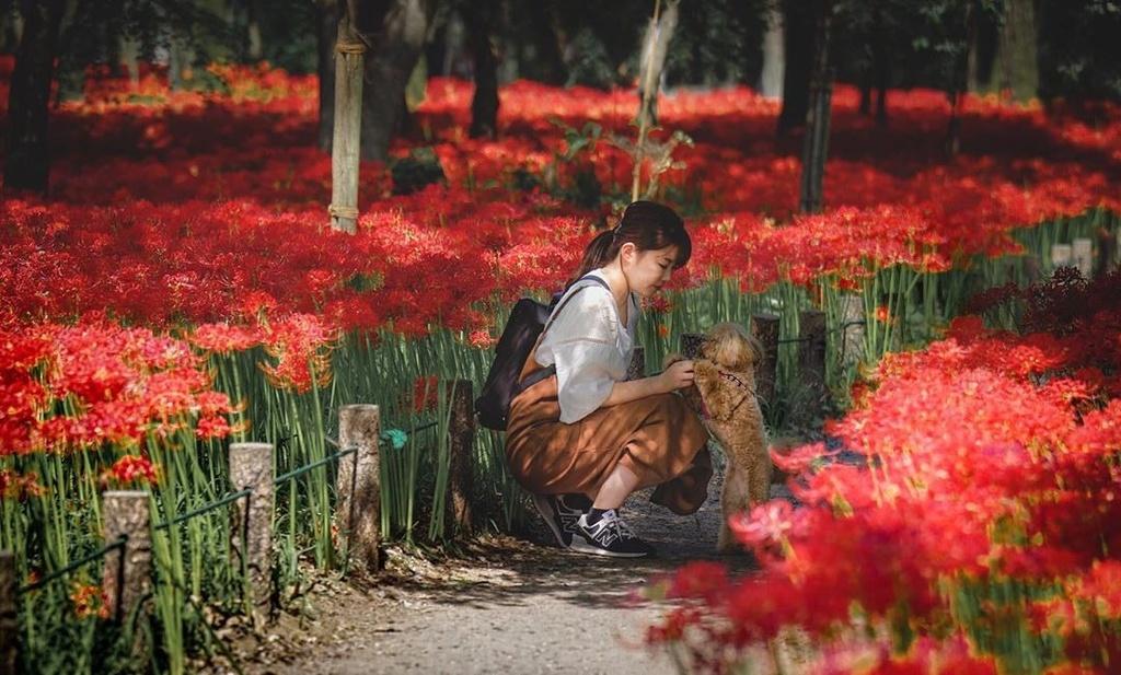 flower bi ngan anh 2