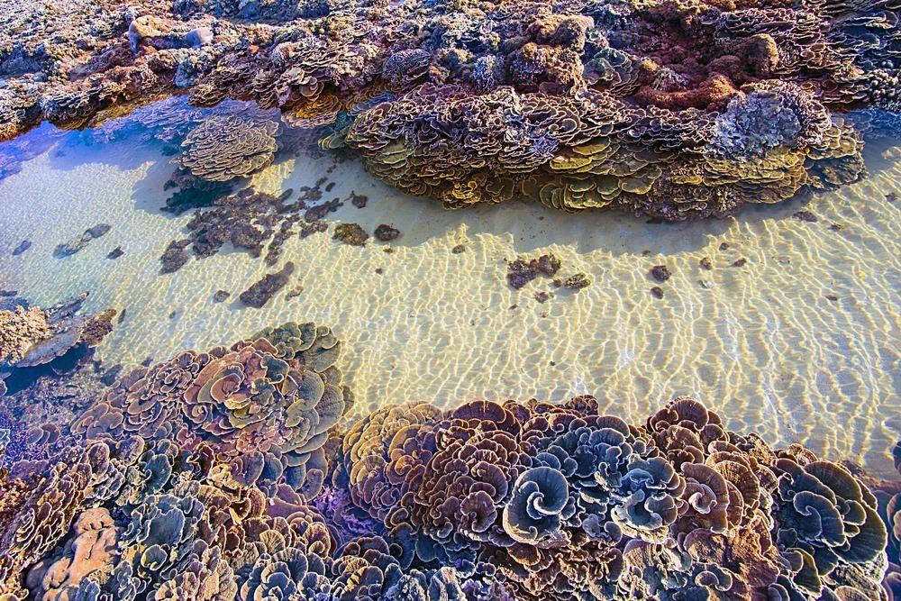 Mê đắm trước vẻ đẹp của 'thiên đường san hô' tại Phú Yên - Ảnh 7.