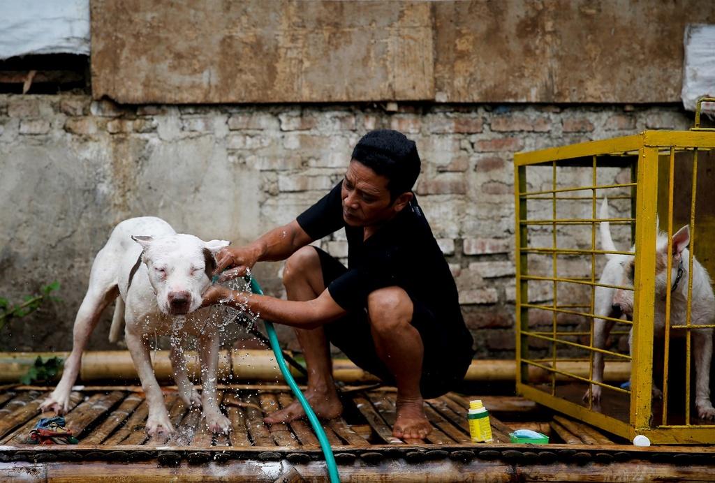 Dau truong sinh tu: Cho nha 'choi' lon rung o Indonesia hinh anh 6