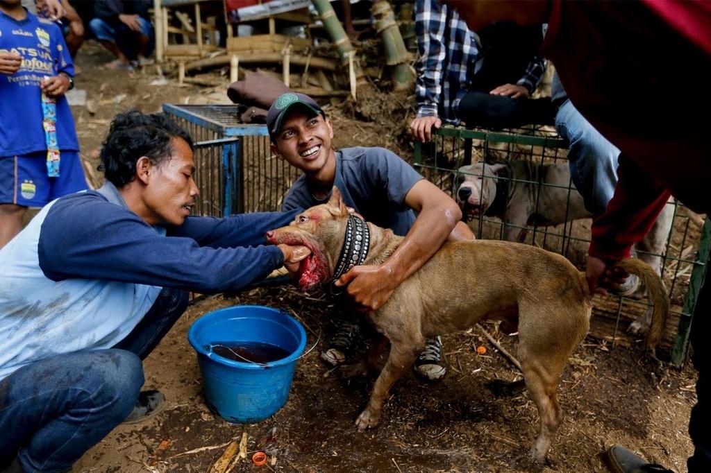 Dau truong sinh tu: Cho nha 'choi' lon rung o Indonesia hinh anh 11