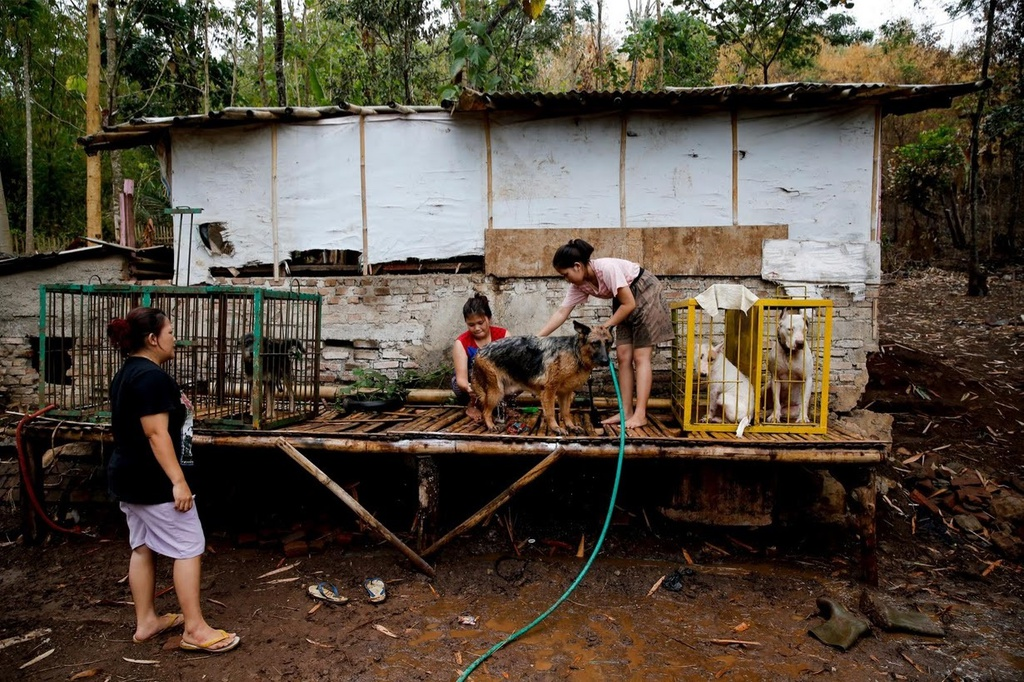 Dau truong sinh tu: Cho nha 'choi' lon rung o Indonesia hinh anh 7