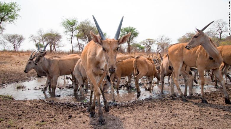 Hang trieu hinh chup bang bay anh duoc mo cho nguoi dung Internet hinh anh 3 200108144920_wildlife_insights_in_water_hole_in_zambezi_region_of_namibia_exlarge_169.jpg