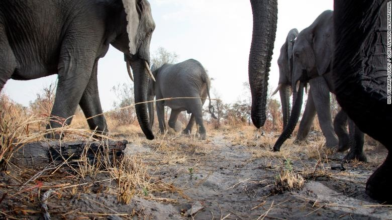 Hang trieu hinh chup bang bay anh duoc mo cho nguoi dung Internet hinh anh 16 200108145418_wildlife_insights_african_elephants_exlarge_169.jpg