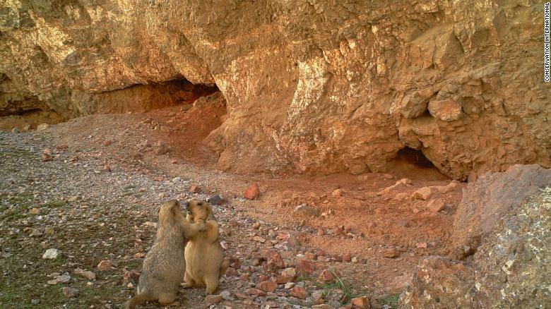 Hang trieu hinh chup bang bay anh duoc mo cho nguoi dung Internet hinh anh 7 200108165134_marmots_wildlife_insights_exlarge_169.jpg