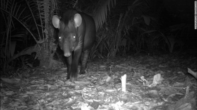 Hang trieu hinh chup bang bay anh duoc mo cho nguoi dung Internet hinh anh 17 200108165827_wildlife_insights_lowland_tapir_exlarge_169.jpg