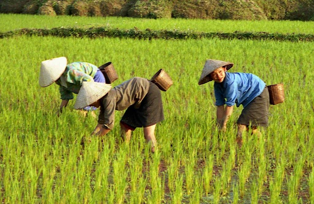 Phụ nữ Việt tại ngày càng trở thành đối tượng kết hôn phổ biến của đàn ông Trung Quốc. Ảnh minh họa: Lon&Queta/Flickr.