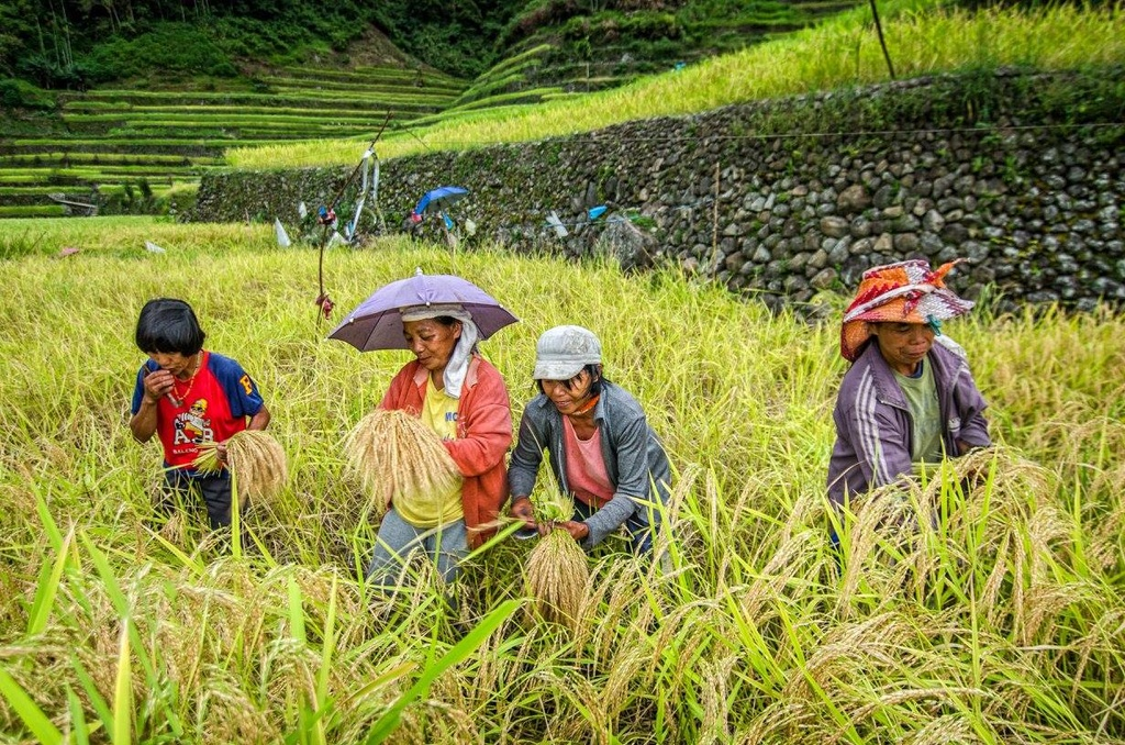 Trekking san may va 4 trai nghiem hap dan chi co o Philippines hinh anh 14