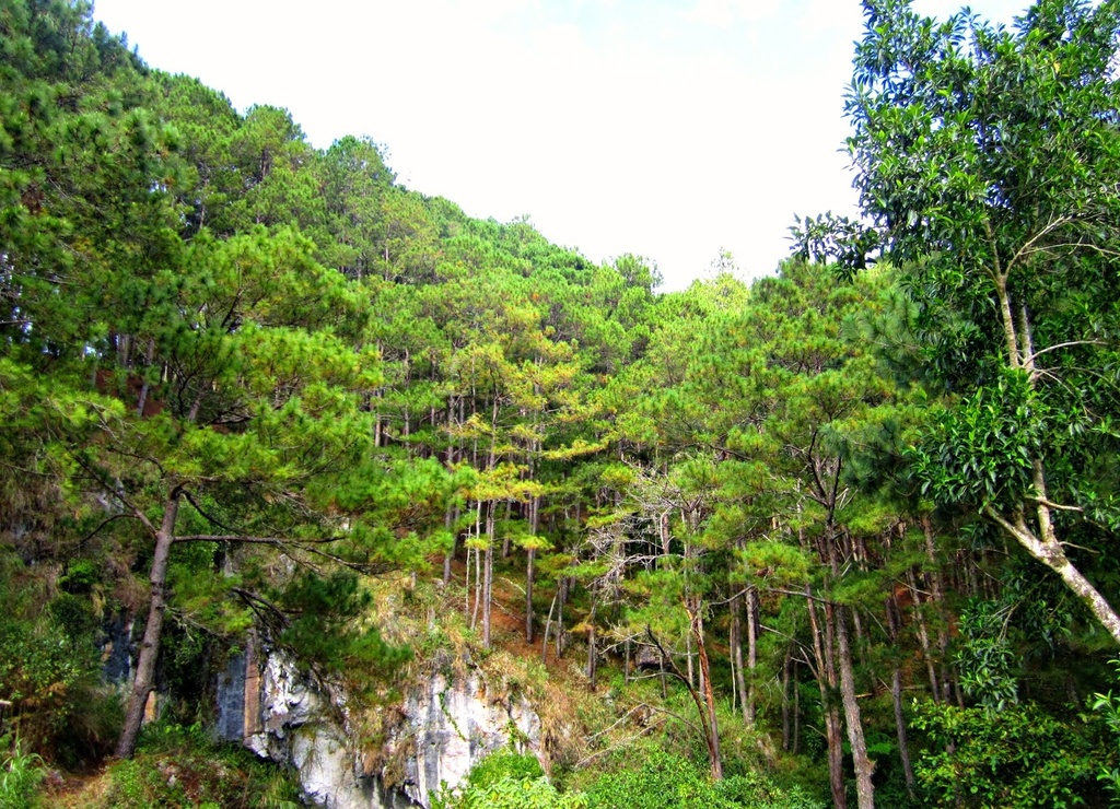 Trekking san may va 4 trai nghiem hap dan chi co o Philippines hinh anh 3