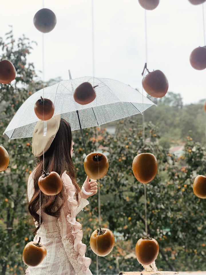 Nhung mua hoa thu hut gioi tre Viet check-in nam 2019 hinh anh 14