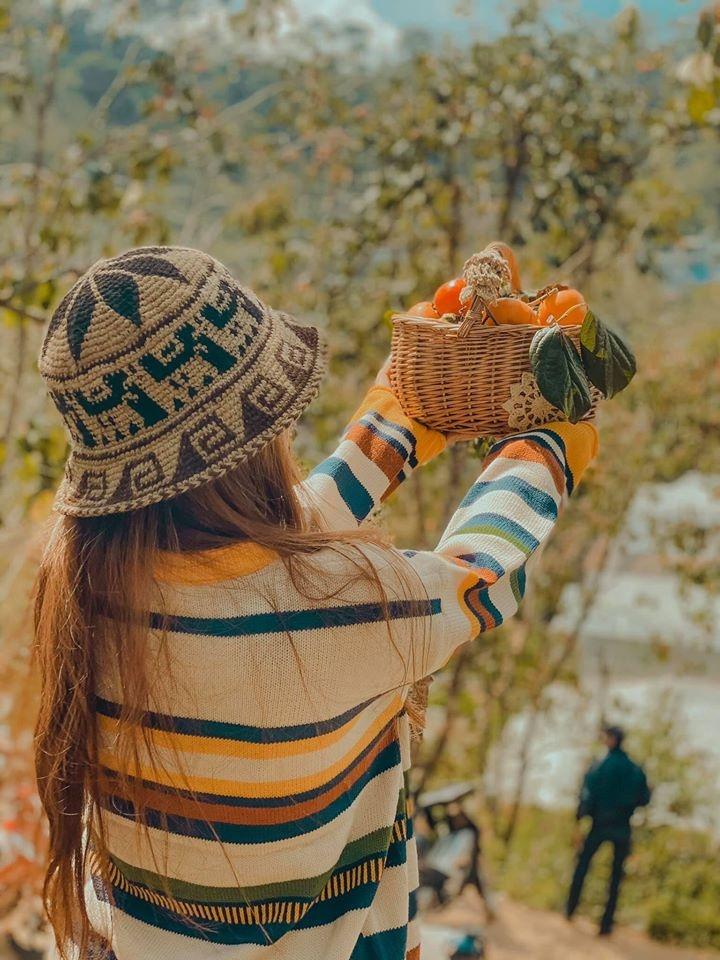 Nhung mua hoa thu hut gioi tre Viet check-in nam 2019 hinh anh 15