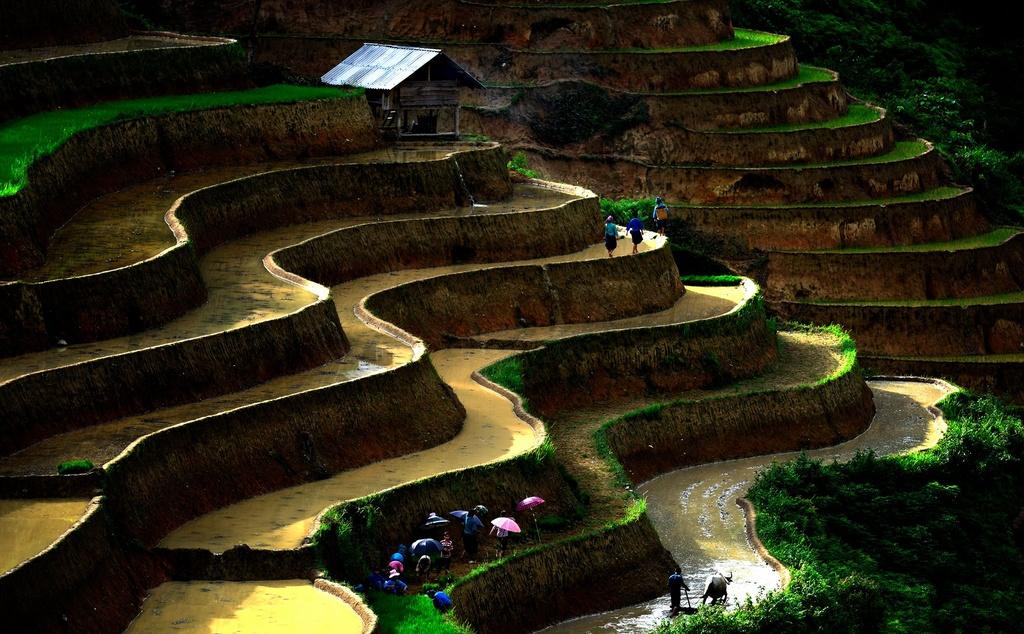 Ruong bac thang Hoang Su Phi anh 3
