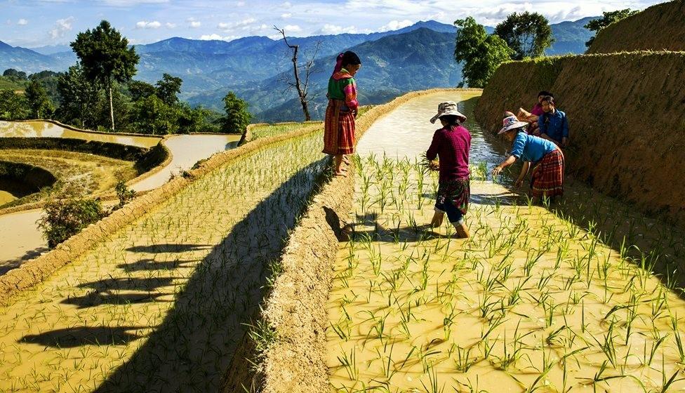 Ruong bac thang Hoang Su Phi anh 10