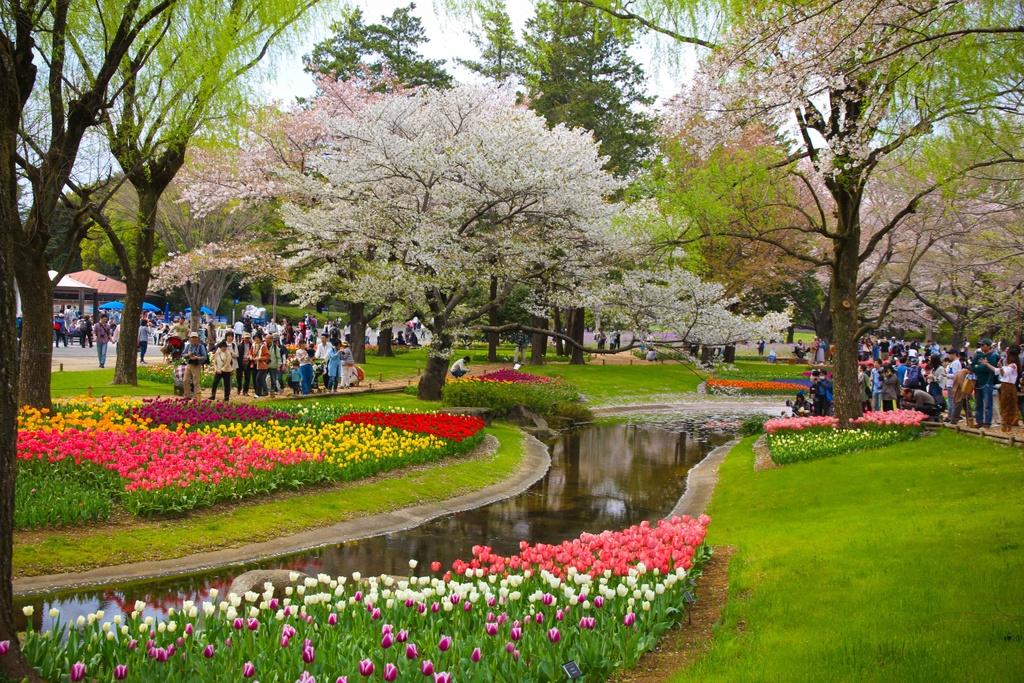 Thien duong hoa o cong vien mang ten Nhat hoang Hirohito hinh anh 3