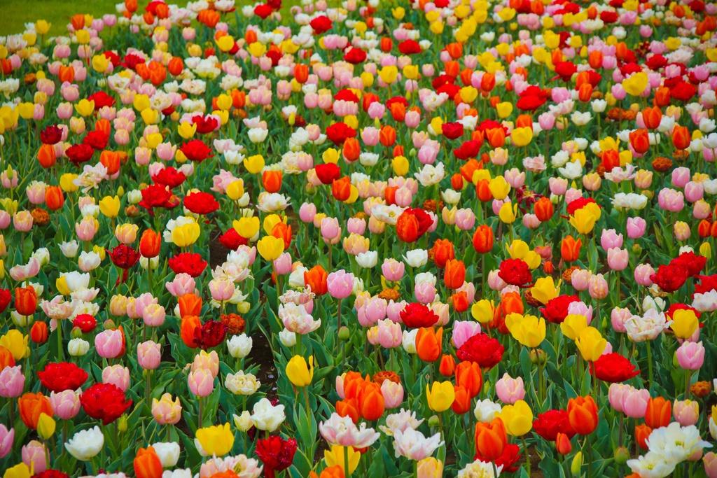 Thien duong hoa o cong vien mang ten Nhat hoang Hirohito hinh anh 4