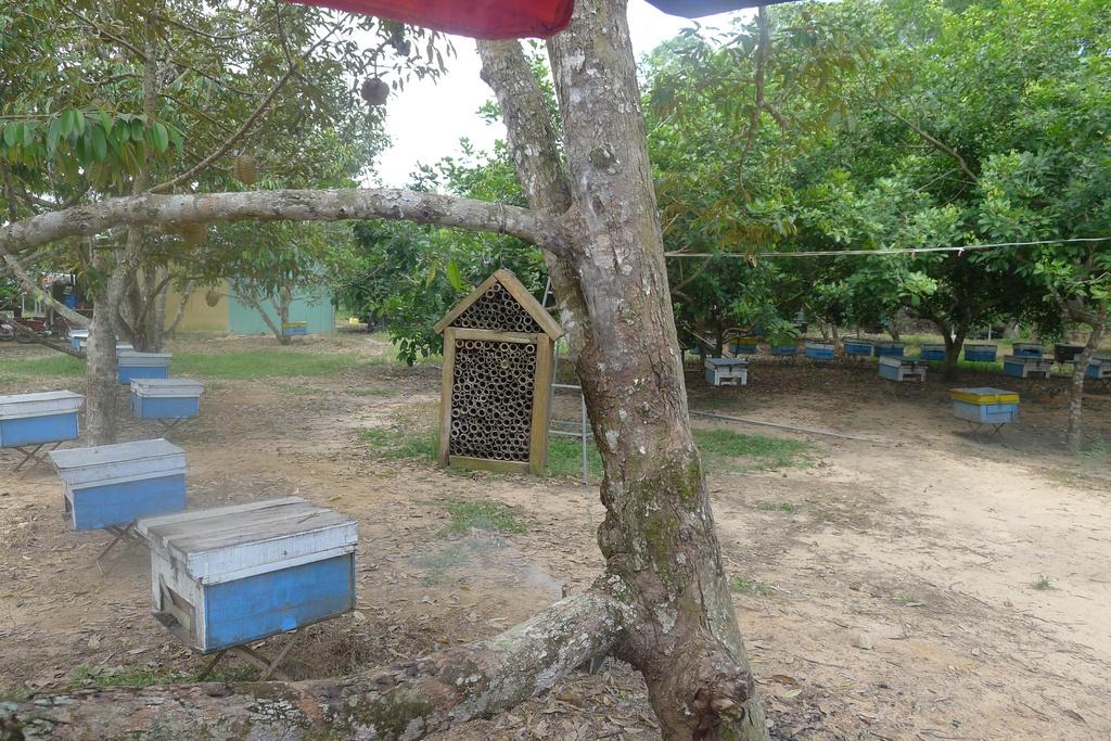 Dao quanh Phu Quoc anh 4