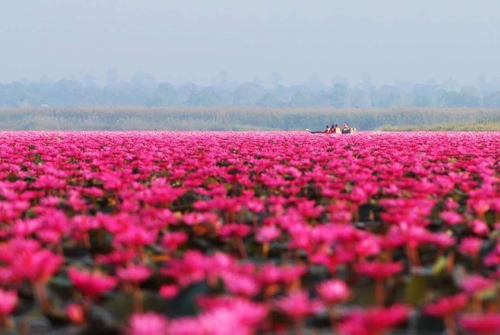 10 điểm du lịch nhuộm sắc hồng trên khắp thế giới