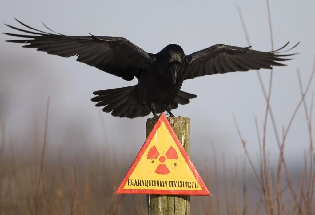 Canh tuong kho tin tai 'vung chet choc' o nha may Chernobyl hinh anh 1