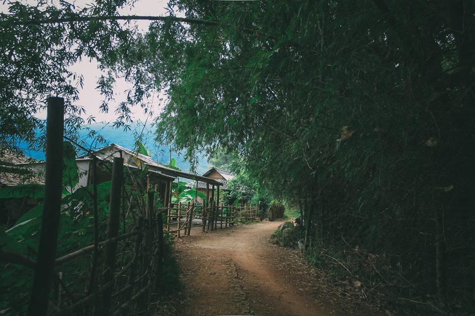 Hoa cai phu sac trang khap nui doi Moc Chau hinh anh 1