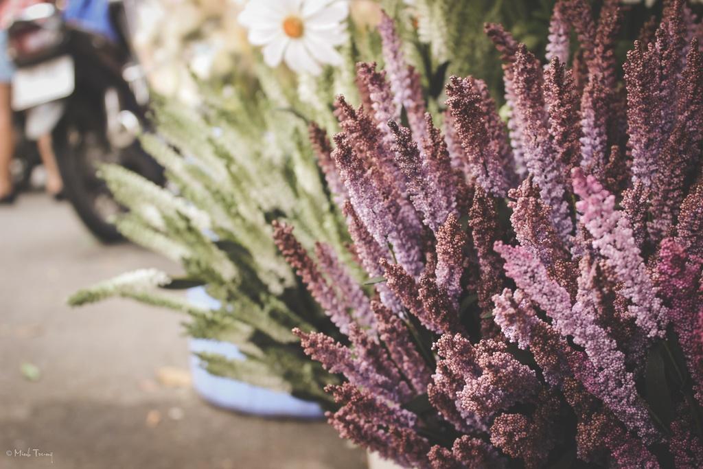 Sac mau binh di tai cho hoa lon nhat Sai Gon hinh anh 7