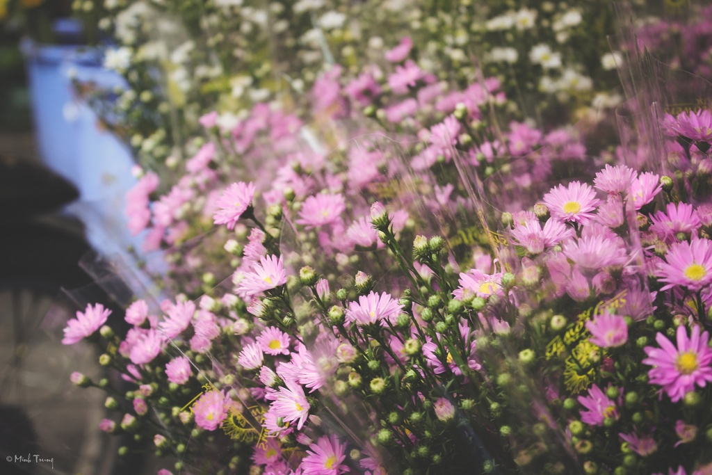 Sac mau binh di tai cho hoa lon nhat Sai Gon hinh anh 8
