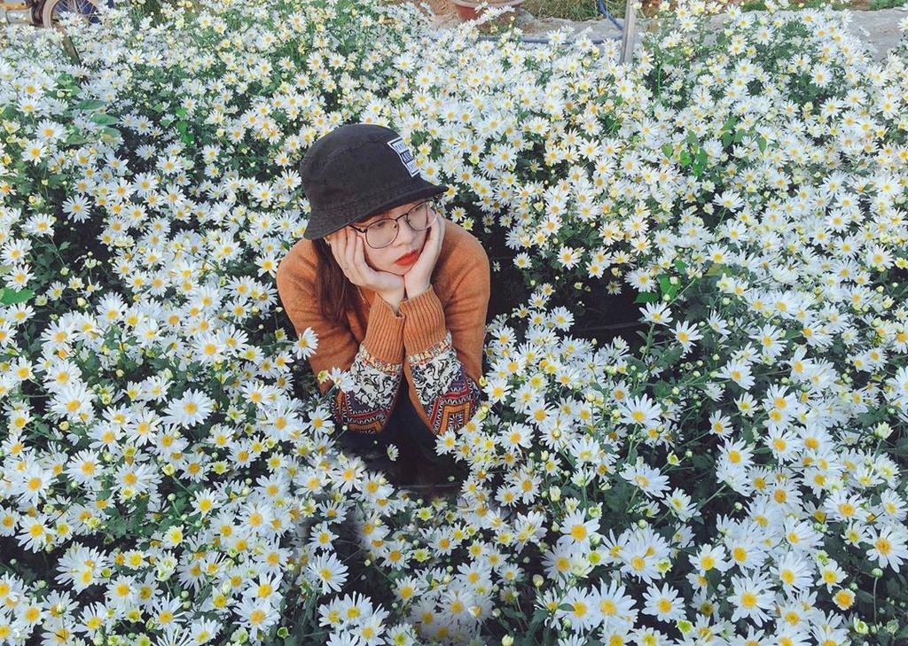 Gioi tre Ha Noi ru nhau check-in voi cuc hoa mi hinh anh 1