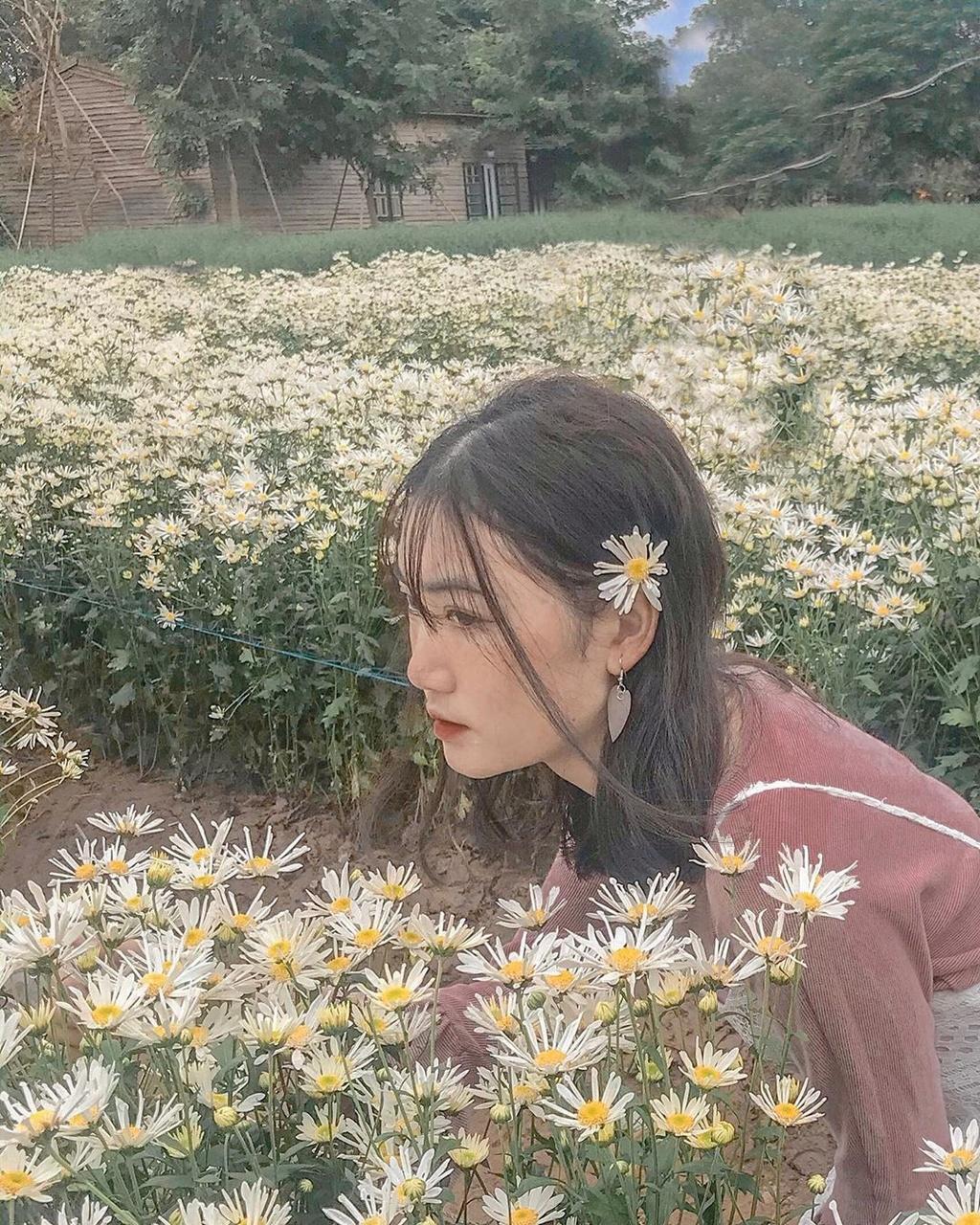 Gioi tre Ha Noi ru nhau check-in voi cuc hoa mi hinh anh 2