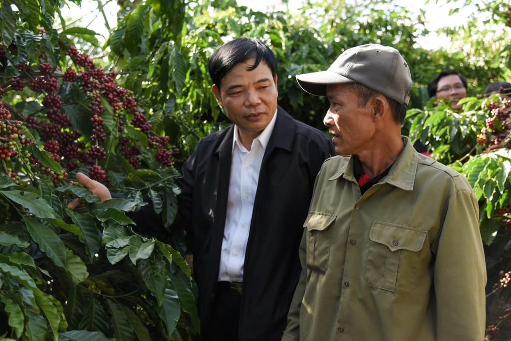Bo truong Bo NN&PTNT: 'Viet Nam dung so 2 the gioi ve san xuat ca phe' hinh anh 3