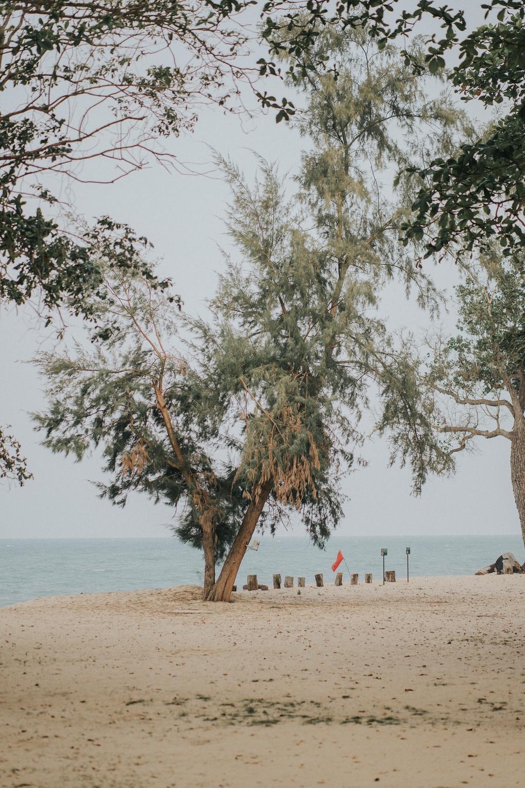 Travel blogger Son Doan chia se 5 diem hut khach du lich o Johor Bahru hinh anh 6