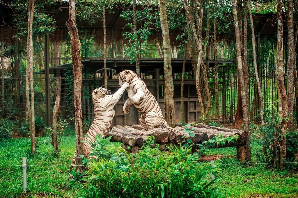 Vinpearl Safari dang cai to chuc hoi bao ton va phuc trang dong vat hinh anh 4  - A4 - Vinpearl Safari đăng cai tổ chức hội bảo tồn và phúc trạng động vật