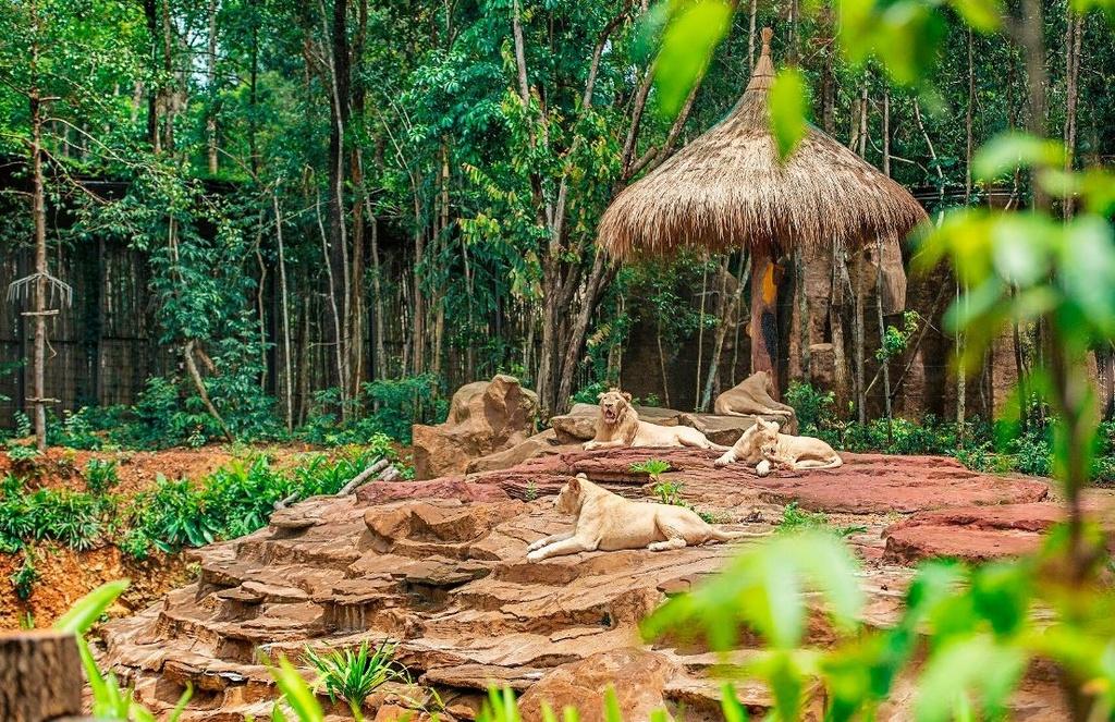 Vinpearl Safari dang cai to chuc hoi bao ton va phuc trang dong vat hinh anh 5  - A5 - Vinpearl Safari đăng cai tổ chức hội bảo tồn và phúc trạng động vật