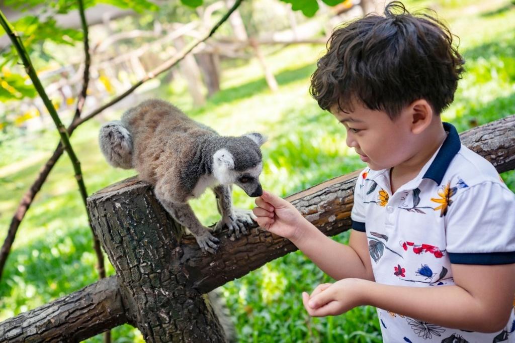 Vinpearl Safari dang cai to chuc hoi bao ton va phuc trang dong vat hinh anh 7  - A7 - Vinpearl Safari đăng cai tổ chức hội bảo tồn và phúc trạng động vật