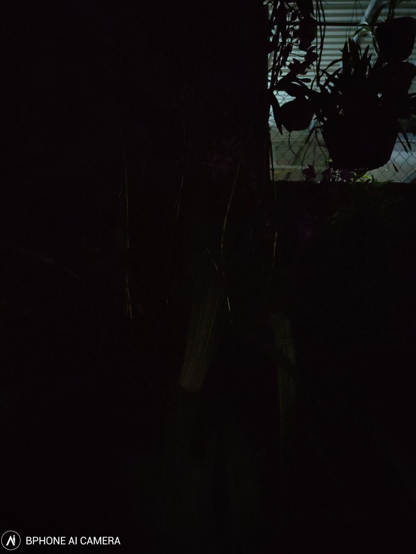 Chup dem sNight tren Bphone B86 co 'bien dem thanh ngay'? hinh anh 2 image003_3.jpg