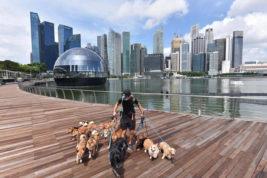 Apple Store tai Marina Bay Sands Singapore anh 3