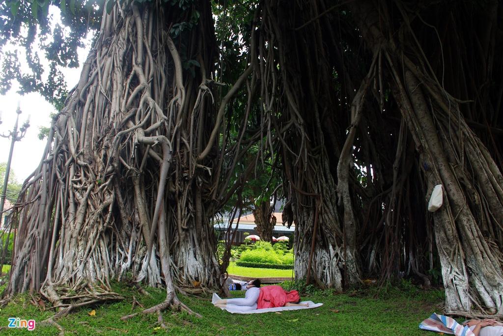 Nhung cay xanh doc nhat tu thuo Sai Gon lap dia hinh anh 4 Qua hàng trăm năm cây vẫn không già yếu đi mà ngày càng khỏe mạnh và phát triển lớn hơn nữa. Tán cây vươn che mát cả một vùng rộng lớn. Rễ càng lan rộng đâm chi chít xuống mặt đất để giúp cây càng vững chãi. 3_zing.jpg Hàng ngày cây đa cổ thụ này vẫn làm nhiệm vụ tỏa bóng mát, là chỗ ngã lưng nghỉ ngơi giữa những ngày nóng bức của biết bao người. Cây đa này đã trở thành một biểu tượng xanh và gắn liền với đời sống tâm linh của những người Sài Gòn xưa.