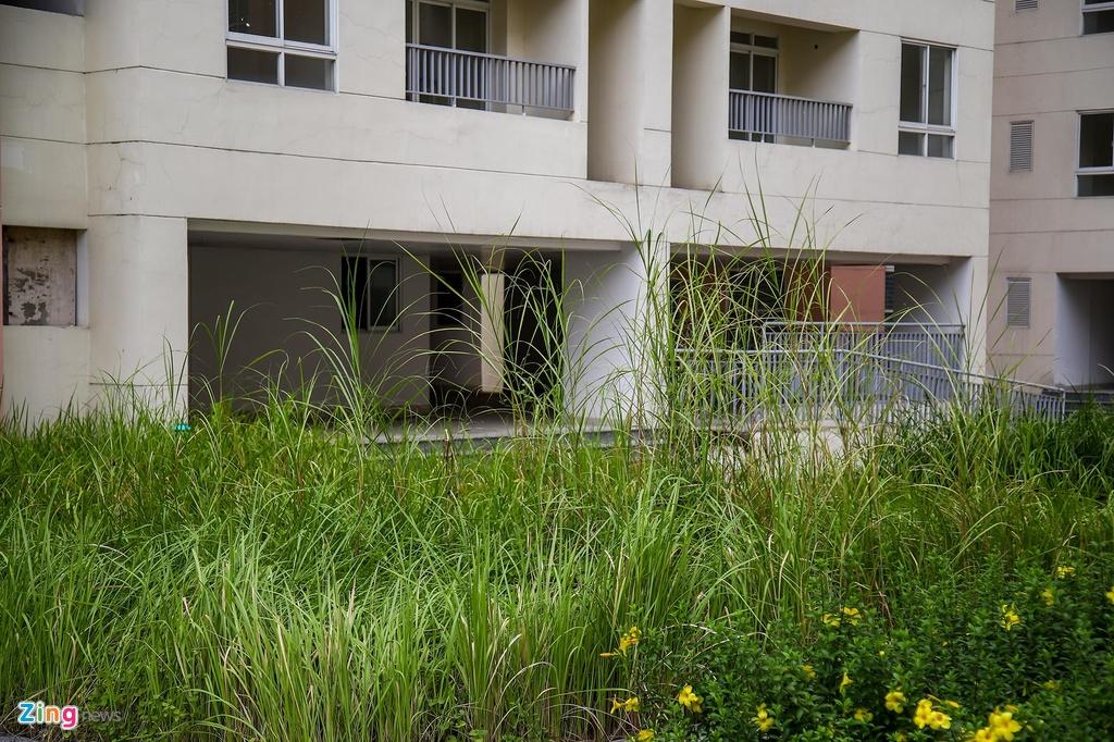 Không người ở, cũng không được duy tu bảo dưỡng thường xuyên, cỏ dại mọc cao quá đầu người trước sảnh chính một số tòa nhà.