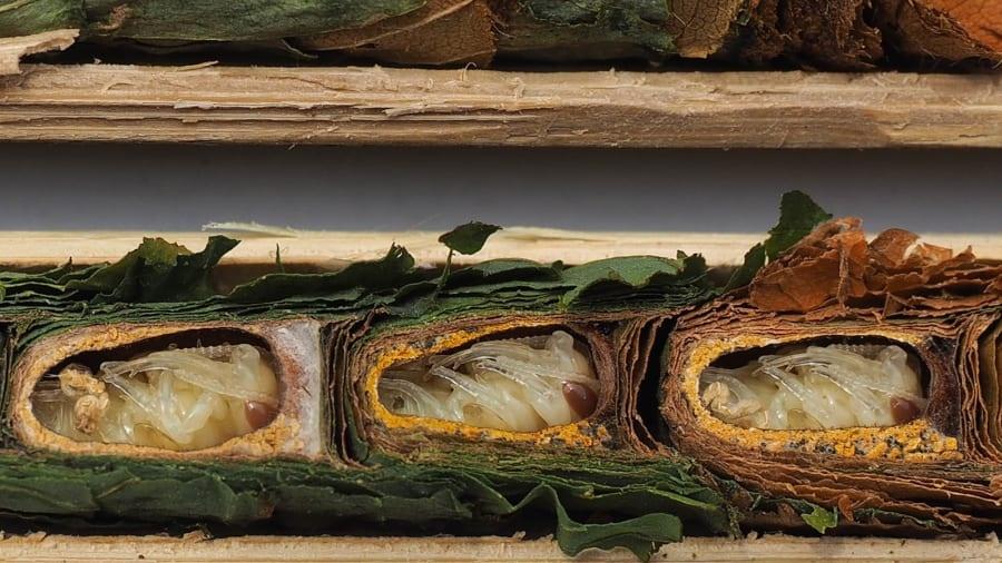 Tran boa khong lo, luoi ba ngon vao top anh dong vat an tuong cua nam hinh anh 9 http___cdn.cnn.com_cnnnext_dam_assets_191128172324-ecological-photos-sleeping-still.jpg