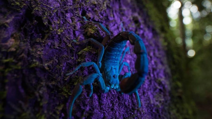 Tran boa khong lo, luoi ba ngon vao top anh dong vat an tuong cua nam hinh anh 10 http___cdn.cnn.com_cnnnext_dam_assets_191128172519-ecological-photos-scorpion.jpg