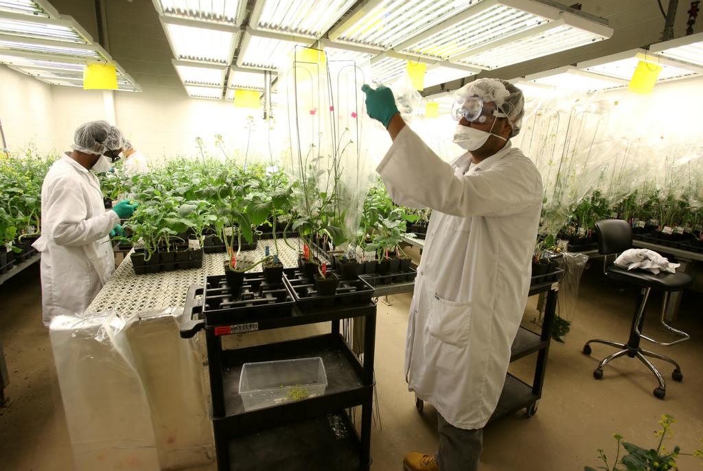 Su tro lai cua Monsanto va hiem hoa thuoc diet co tai Viet Nam hinh anh 3