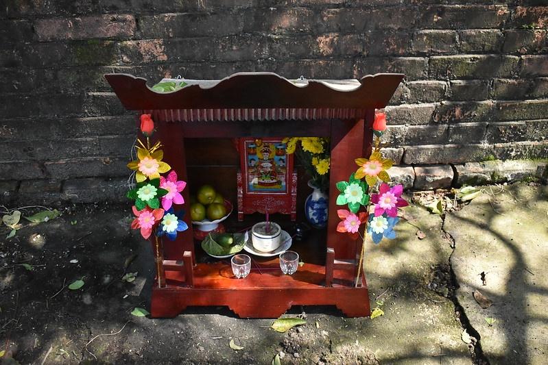 hoa giay Thanh Tien anh 10
