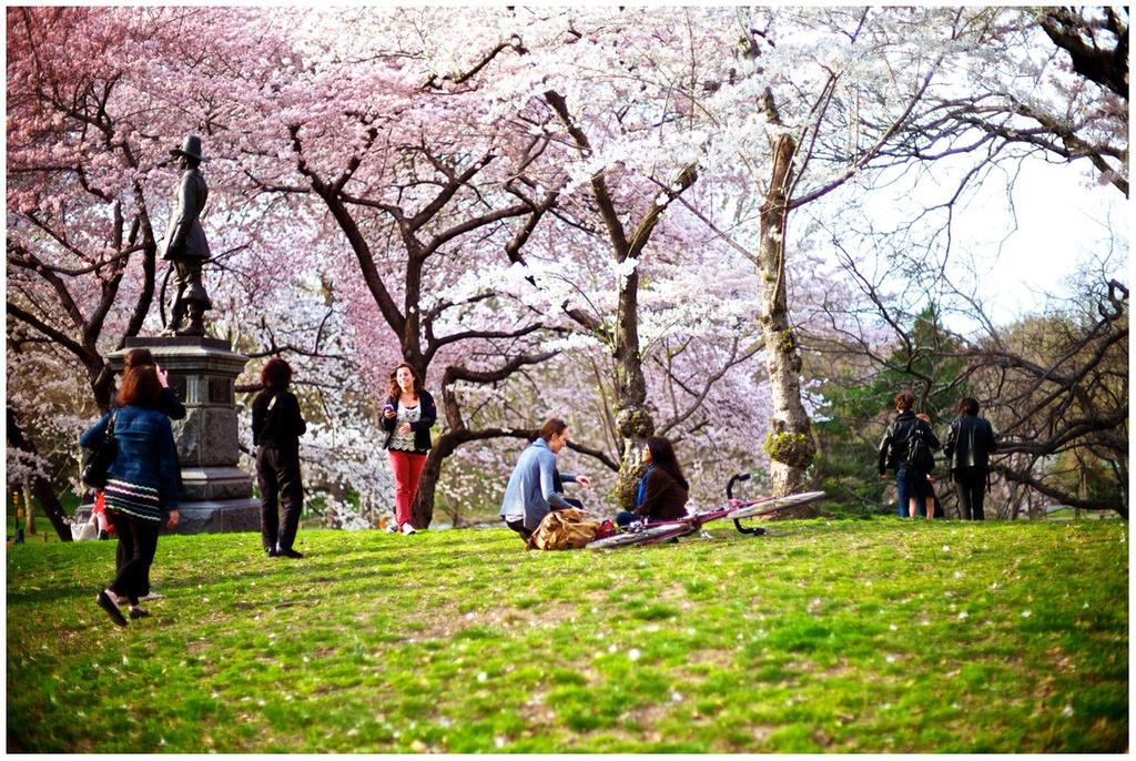 Central Park - Mang xanh khong lo giua New York hinh anh 7