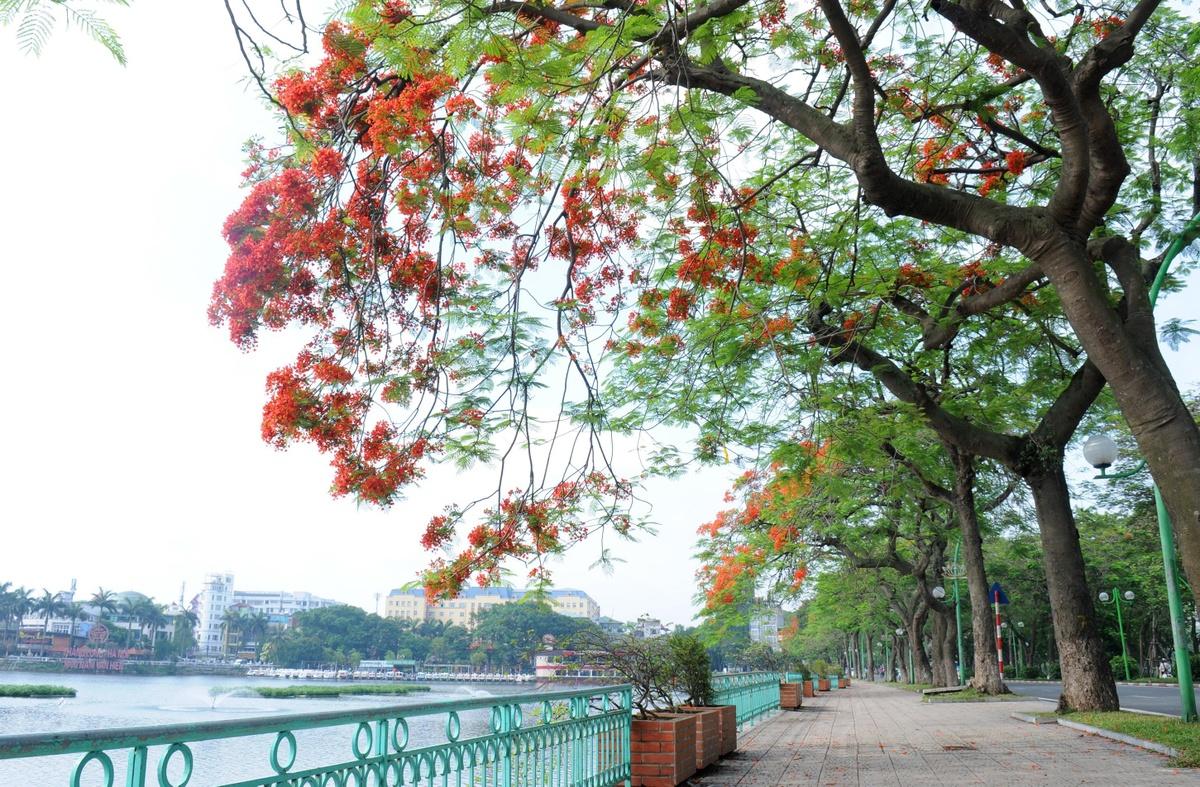 Ho Tay tho mong trong long Ha Noi hinh anh 13