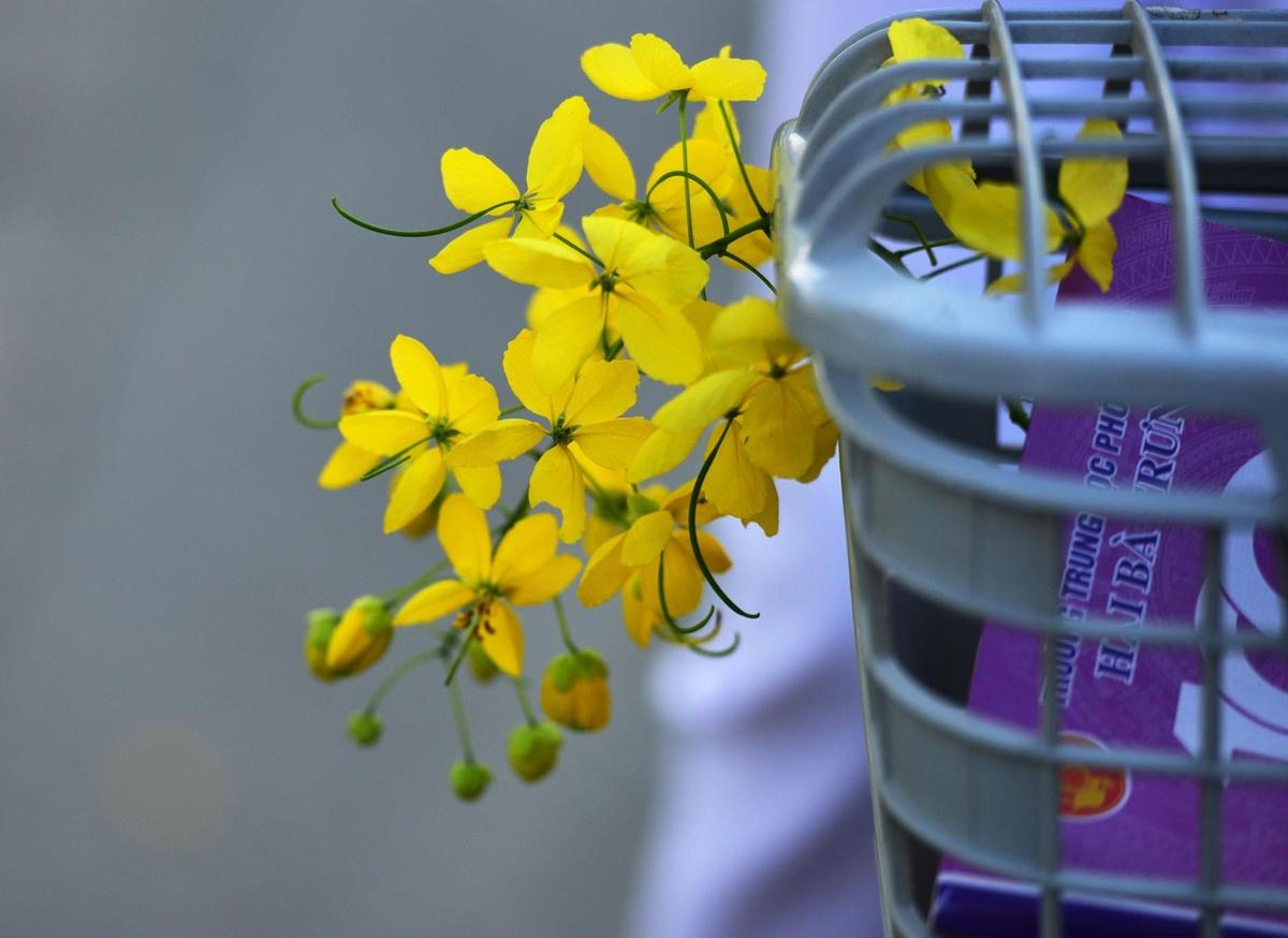 Hue rop troi sac hoa nhung ngay dau ha hinh anh 24